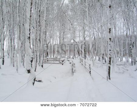 Winter Scence