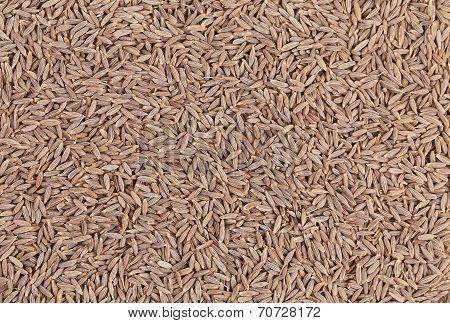 Close up of cumin seeds. Macro.