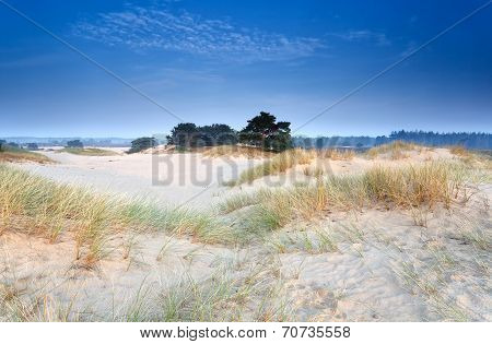 Sand Dunes In Morning Dusk