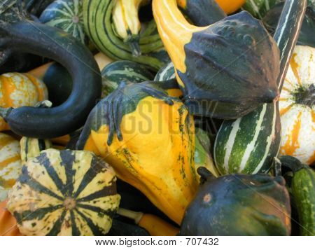 Seasonal Squash