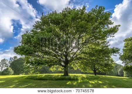 Beautiful Tree On Hill In Spring