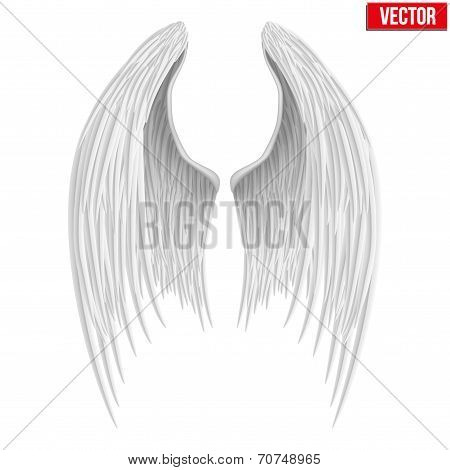 White folded angel wings. Vector.