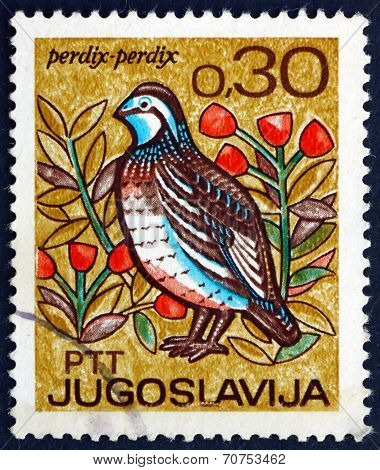 Postage Stamp Yugoslavia 1967 Partridge, Bird
