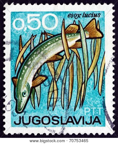 Postage Stamp Yugoslavia 1967 Northern Pike, Bird