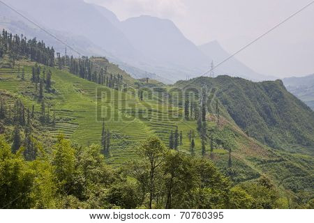 Paddy fields in mountains