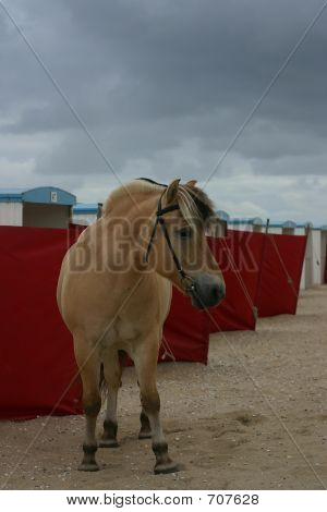 Horse With Strand Booths