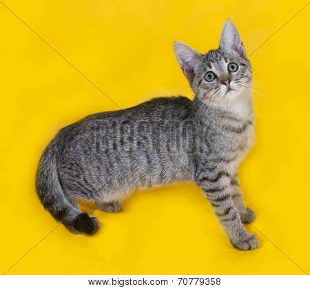 Striped With White Kitten Standing And Meows On Yellow