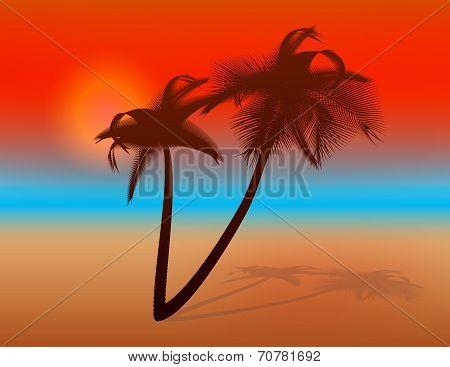 Sunset On Tropical Beach. Illustration