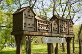 stock photo of public housing  - A row of wooden made bird houses in the public park - JPG