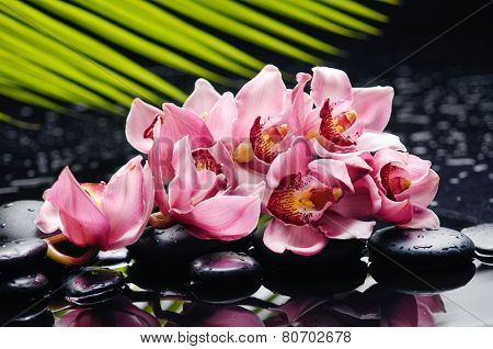 Lying down branch pink with leaf and stones on wet background