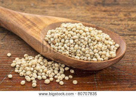 gluten free sorghum grain on a wooden spoon against a grunge wood