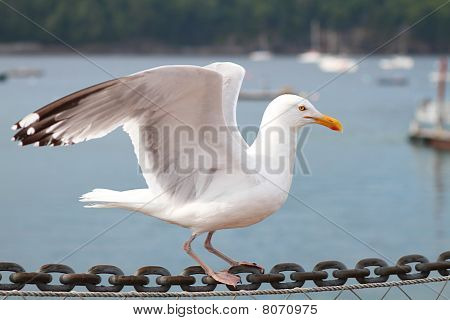 Seagull On Chain