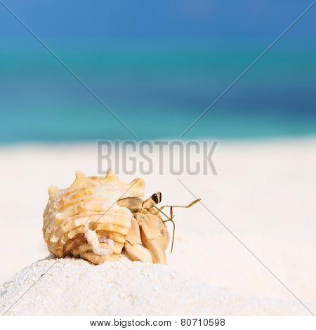 Hermit crab on beach at Maldives
