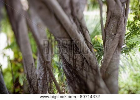 A surreal, dream inspired image of the trunk of a banyan tree with vines growing around it, tilt shift selective focus.