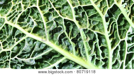 Leaf Veins Of Green Cabbage With Many Embossed Ripples