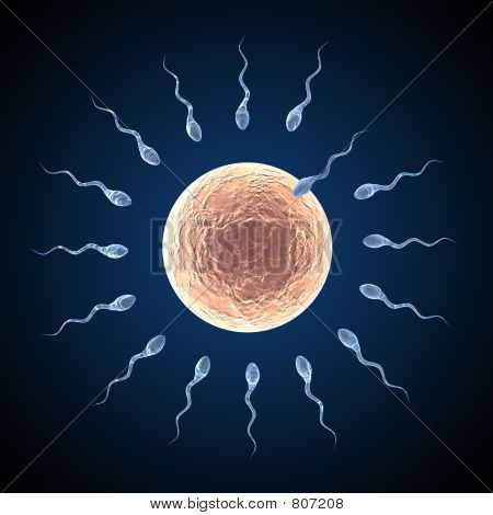 Sperm approaching egg