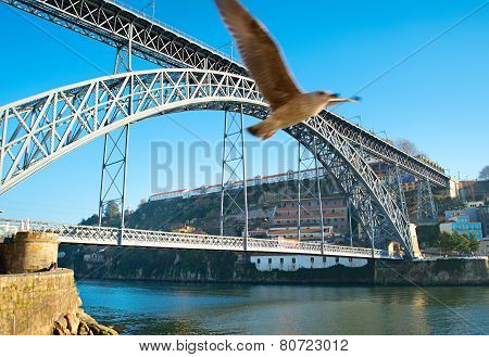 Porto Bridge And Seagull