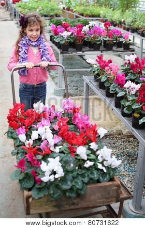 Little girl driven cart with beauty flower in the greenhouse