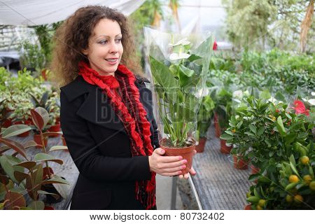 Beautiful woman holding flower pot with white anthurium in the greenhouse
