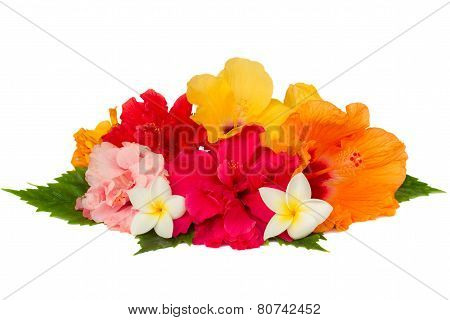 pile  of colorful hibiscus flowers