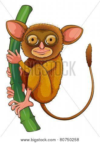 Illustration of a close up tarsier