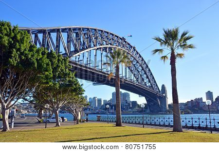 Sydney Harbour Bridge & Palm Trees From Dawes Point Park