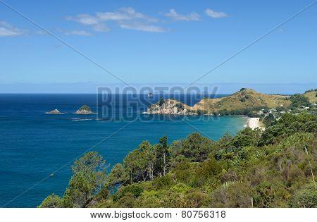 Coromandel Peninsula Seashore