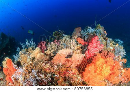 Vibrant, Colorful tropical coral reef