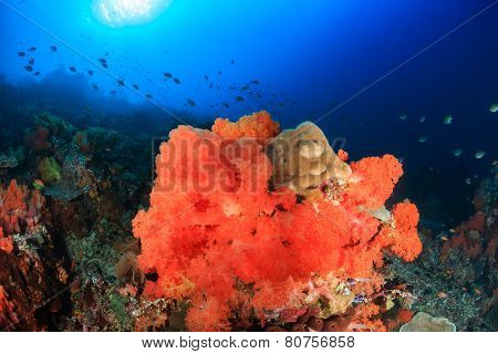 Soft Corals At Crystal Rock, Komodo