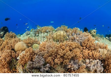 Shallow Water Soft Corals.  Gili Air
