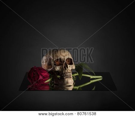 Skull Biting a Red Rose Stem