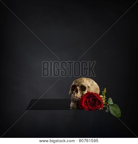 Conceptual Skull and Red Rose on Platform