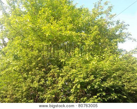 Dense foliage of tree