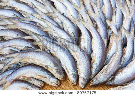 Salted Threadfin Fish