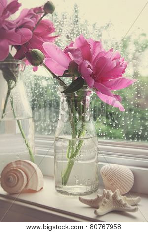 Peony flowers in milk bottles on the window sill