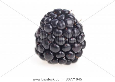 Fresh Blackberry