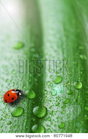 Bright Green Leaf