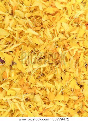 Background Of Petals Marigold Flower