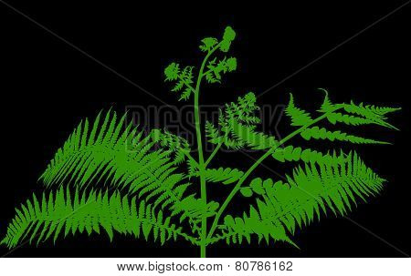 illustration with fern bush silhouettes isolated on black background