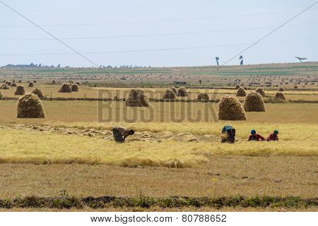 African Rural Life And Farmland