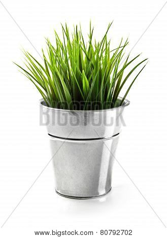 Green Grass In Metal Bucket Isolated On White