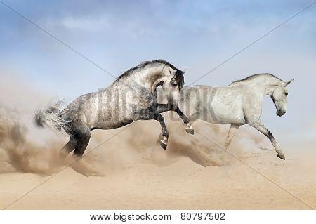 Couple of horse run on desert