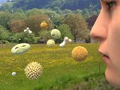 pic of hay fever  - Different types of pollen causing hay fever - JPG