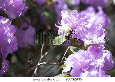 Bee Pollinating Pink Flower