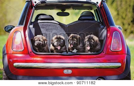 a group of puppies in a car trunk