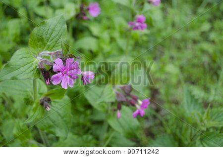 Green Leaves And Pink Flowers Background