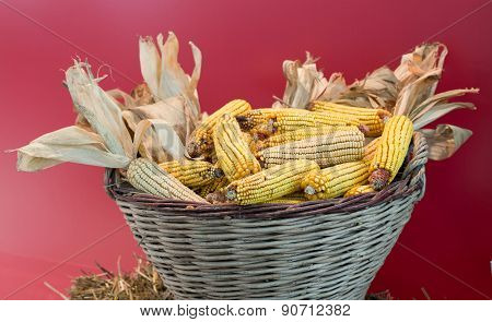 Corn Cob In Basket