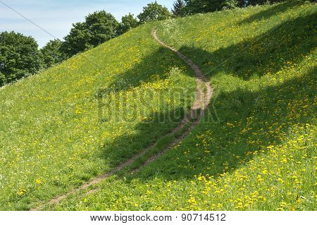 Springtime Meadow With Trail