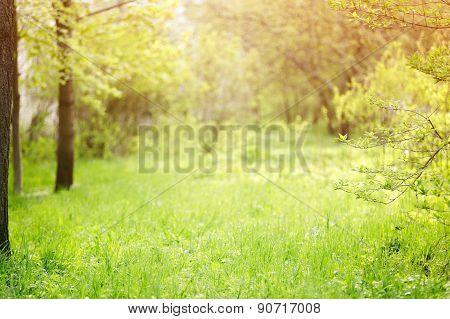 yard garden background with shallow focus