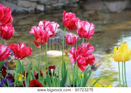 Red And Yellow Tulips At A Decorative Reservoir